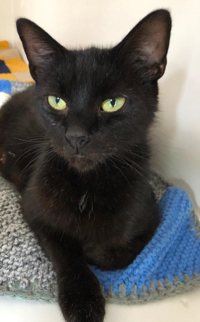 Trixie, Worcester and District Cats Protection