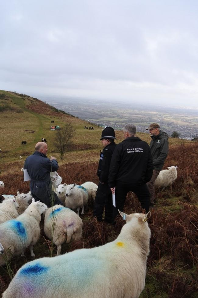 SAD: Lamb put down after attacked by dog on Malvern Hills