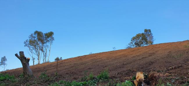 EARTH: The hillside has been churned up by heavy machinery