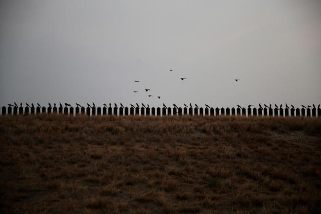 Birds perch on the top of the US-Mexico border fence in Penitas, Texas (Dario Lopez-Mills/AP)