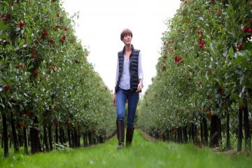 Fruit picking: We put out 70 job vacancies but had nine applications