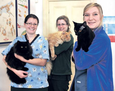 HOME SEARCH: Avenue Veterinary Centre nurses Clare Wells, Sarah Vivian and Natalie Hazzard with unwanted cats Marmite, Aslan and Minnie Mouse, who need new homes.