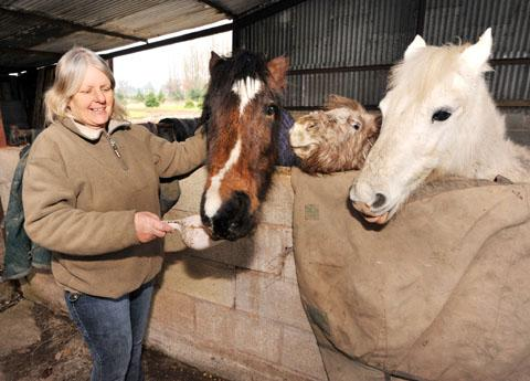 ANIMALS SAVED: Sue Penny with three of the neglected horses she rescued. Picture by John Anyon. 0913256701