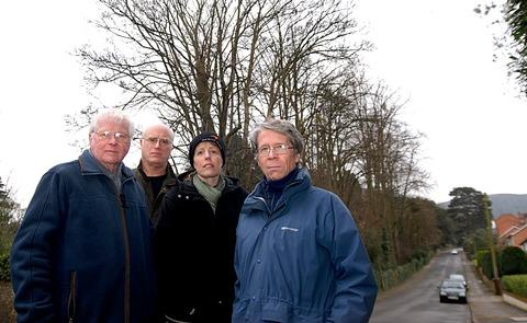 80FT TREES: Concerned residents of Somers Road, from left, are John Dixon, brother and sister Simon and Sarah Oddy, and Neil Mackenzie. Picture by Nick Toogood. 0913255002.