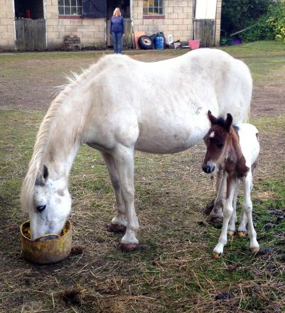SPECIAL DELIVERY: Ceiriad and her foal Benjie.