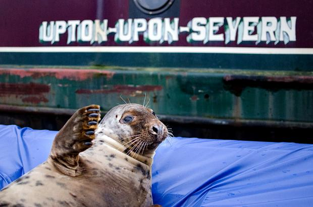 POSTCARD PERFECT: Keith the seal relaxing in Upton. Picture by Elliott Dean