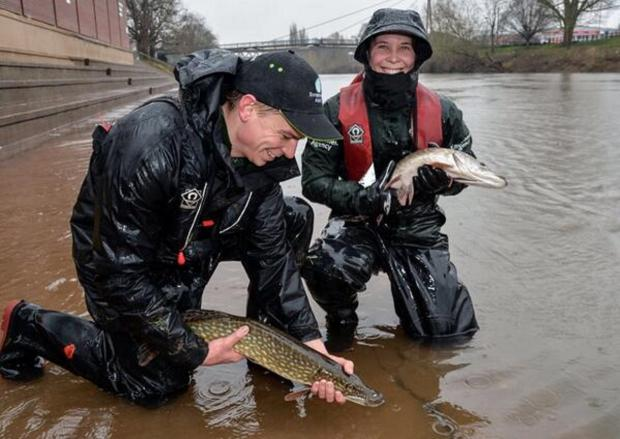 Malvern Gazette: PIKE! Fish rescued from floodwater at Pitchcroft. Picture: Environment Agency
