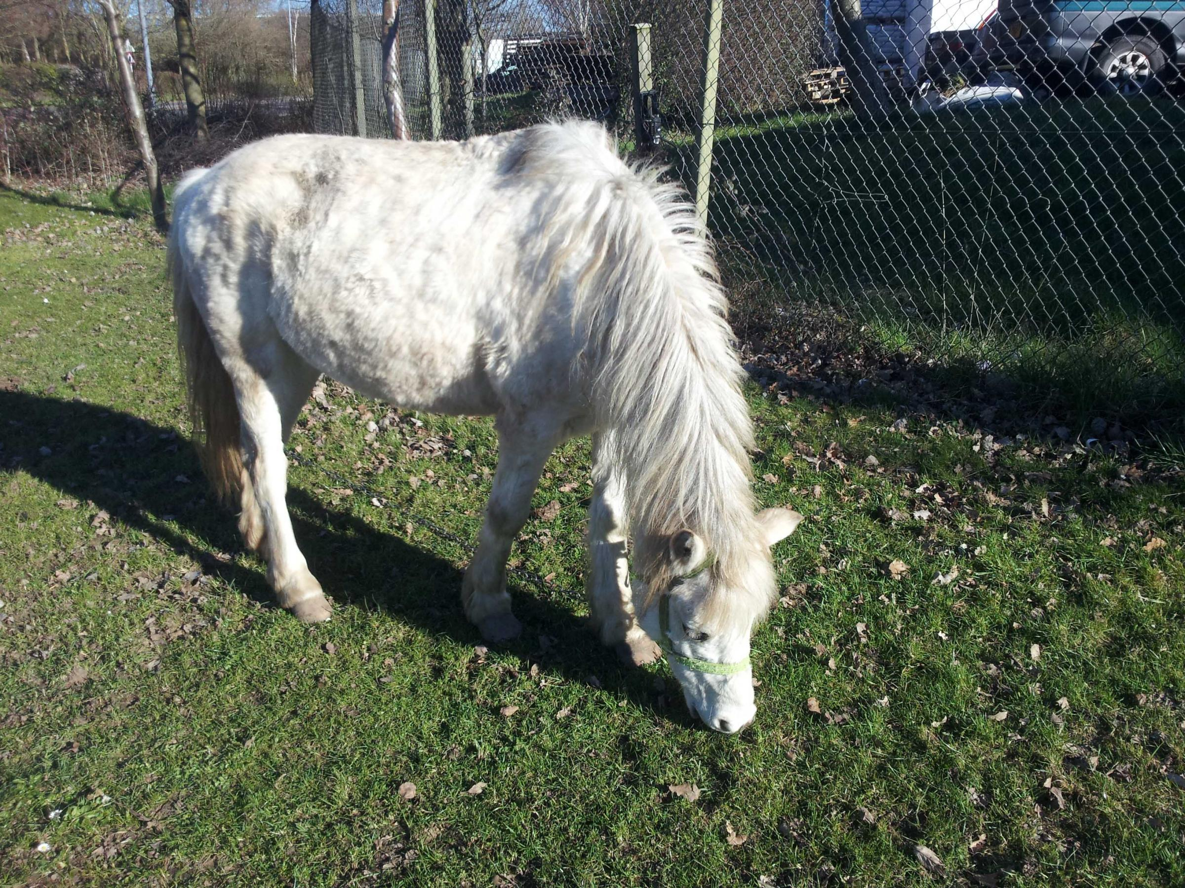 One of two horses spotted near the roundabout in Wainwright Road in Worcester on Sunday