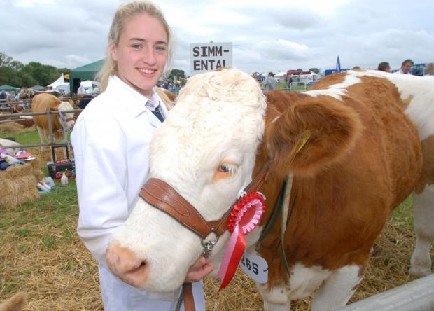 Malvern Gazette: 2714642401. 05/07/14. Hanbury Countryside Show. Amy Cox with prize-winning simmental heifer 'Cornelia'. Picture by Nick Toogood. (7890466)