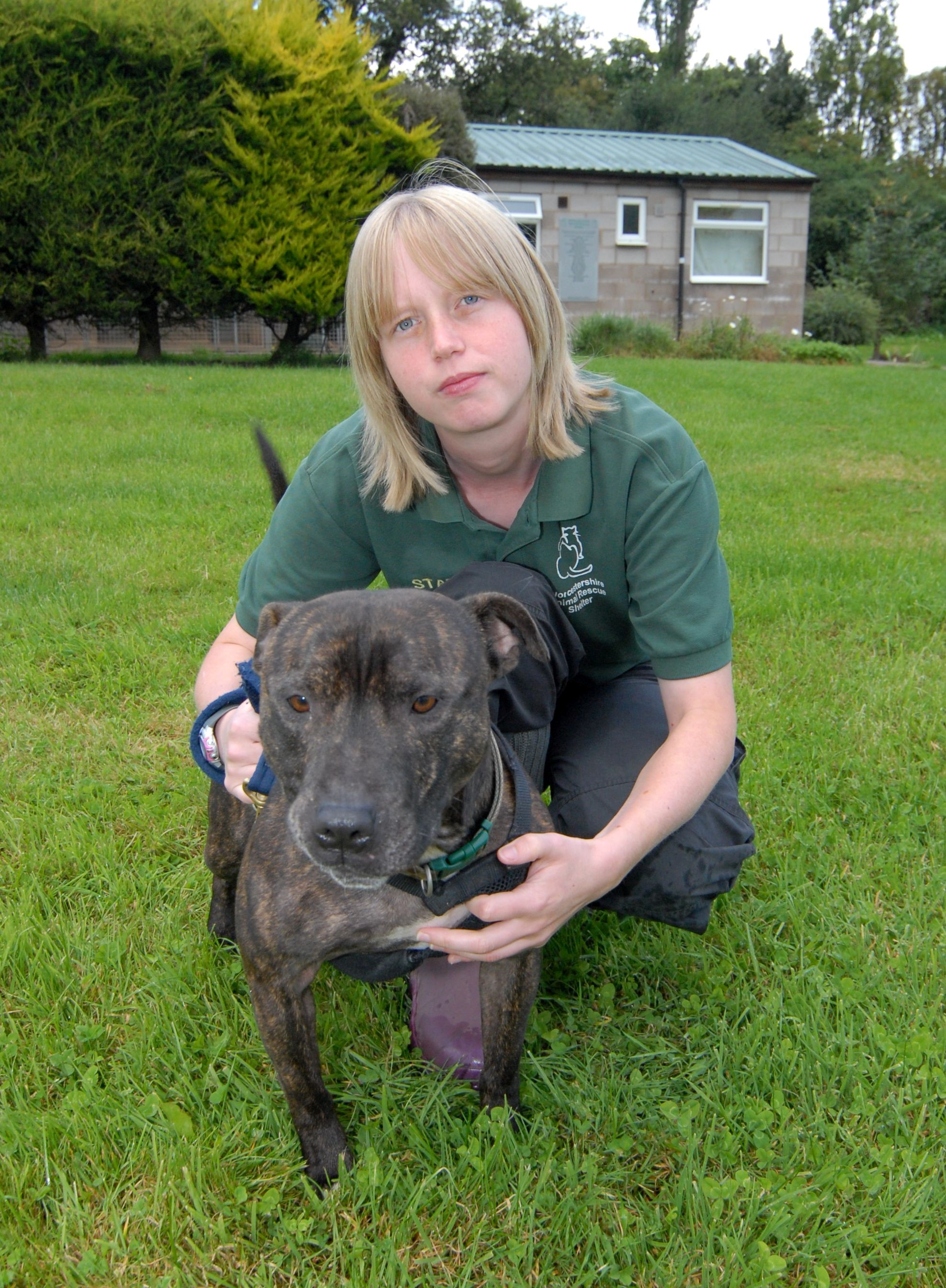 Lack of dog walkers impacts on rescue shelter