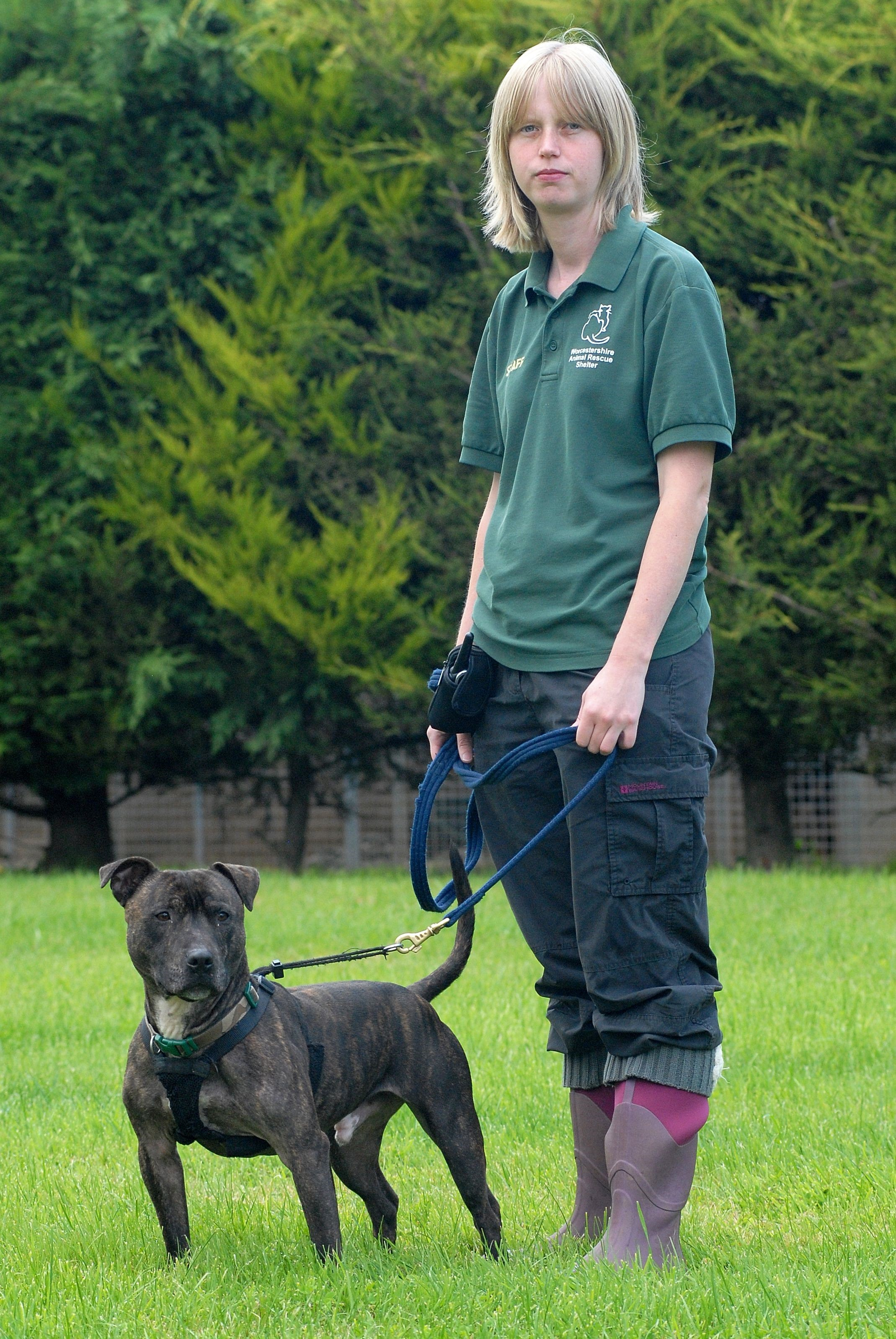 Wagging tails once again at rescue shelter which faced a drop in dog walkers