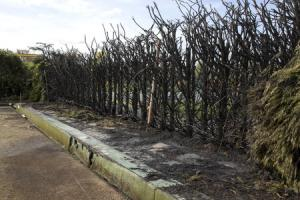 WN_110417_22 Paul Jackson 10.04.17 Malvern - A hedge next to the bowling club, Victoria Park, Malvern which was damaged by a fire..