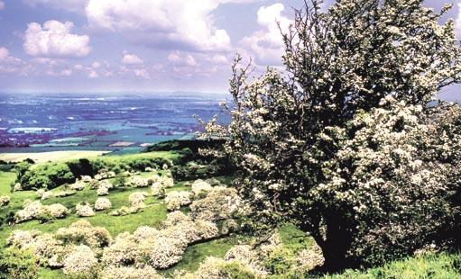 SPRING: On Bredon Hill