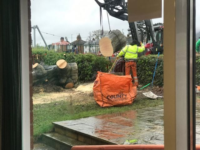 REMOVAL: the stump of the tree being taken away by workmen